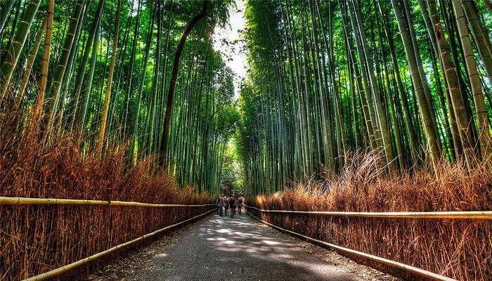 岚山旅游图片