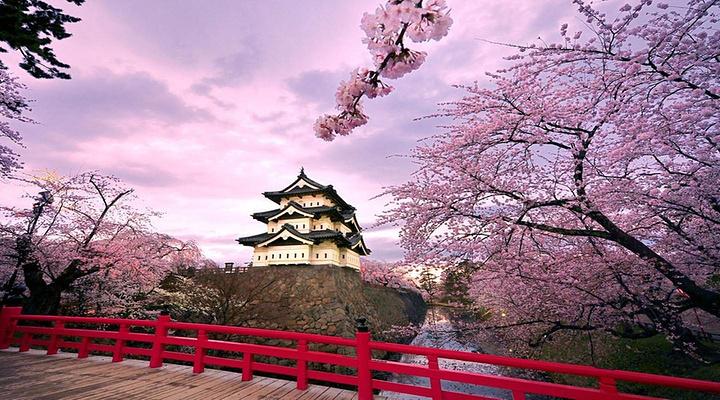 樱花旅游图片