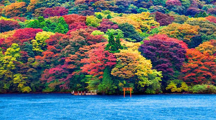 芦之湖旅游图片