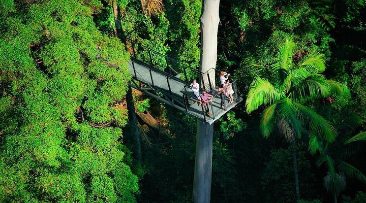 树顶漫步旅游图片
