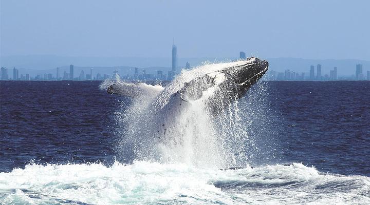 观鲸  旅游图片