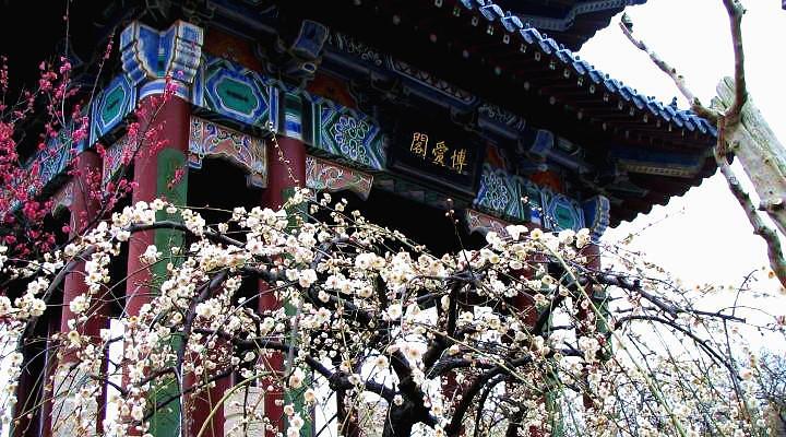 龙岩梅花山旅游图片