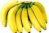 茂生围香蕉