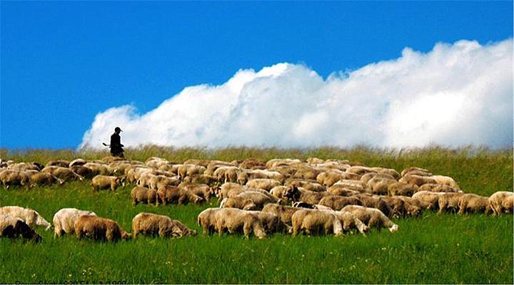 乌兰布统草原旅游图片