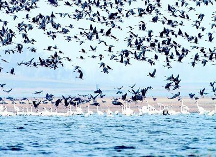 洞庭湖观鸟赛