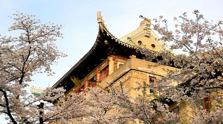 樱花丛中的求学圣地旅游图片