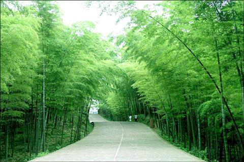 蜀南竹海-翡翠长廊