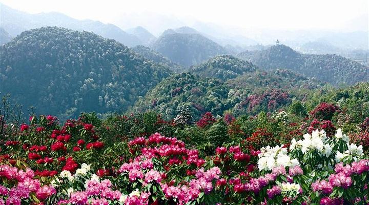 百里杜鹃旅游图片