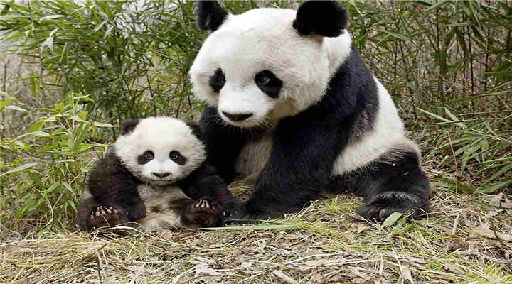 碧峰峡野生动物园旅游图片