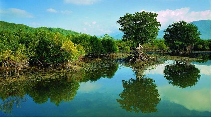 海口红树林旅游图片