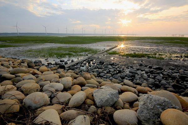 高美湿地旅游图片