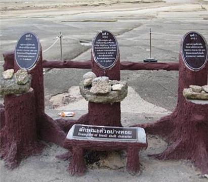 贝壳化石海滩