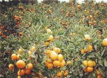 济州柑橘博览会
