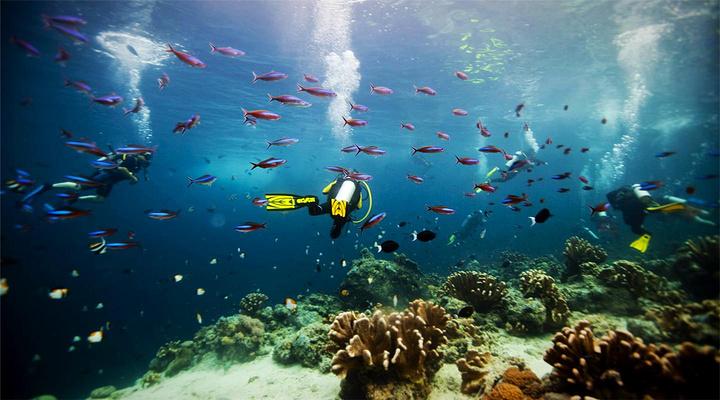 潜水旅游图片
