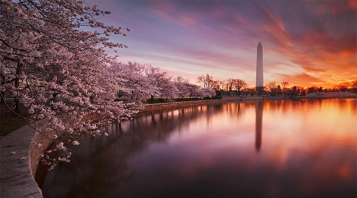 华盛顿纪念碑旅游图片