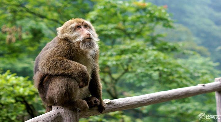 灵猴旅游图片