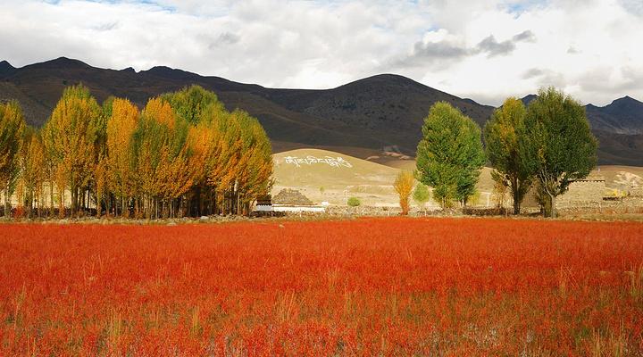 桑堆红草滩旅游图片