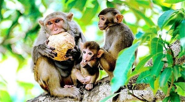 猴岛旅游图片