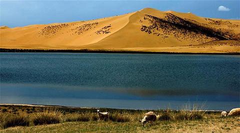 青海湖沙岛