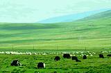 湖东种羊场