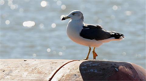 菩提岛观鸟