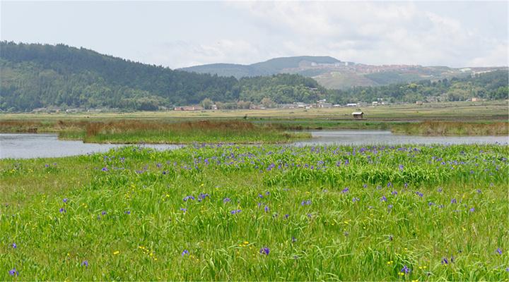 北海湿地旅游图片