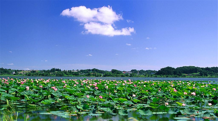 微山湖旅游图片