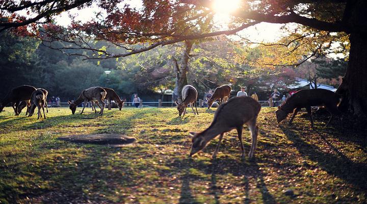 奈良公园旅游图片