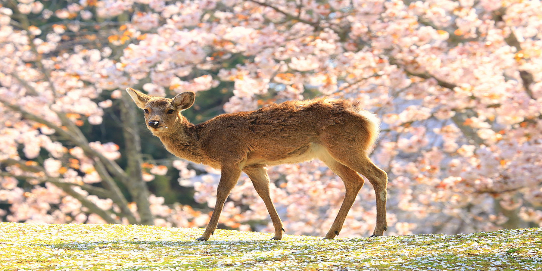 奈良经典一日游