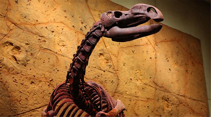 昆士兰博物馆旅游图片