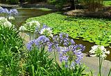 库塔山布里斯班植物园