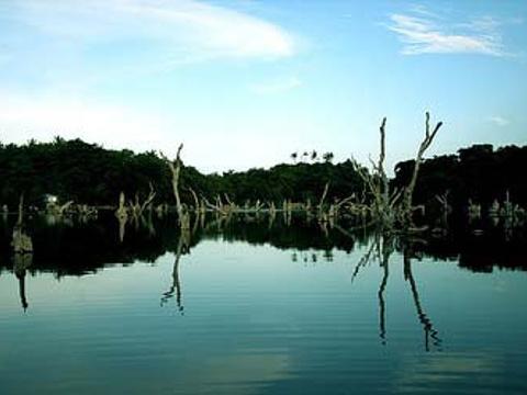水中森林旅游景点图片