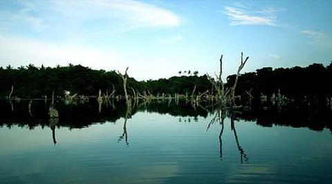 水中森林的图片