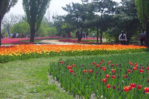 百花园的图片