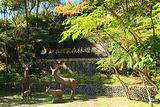 知本国家森林游乐区