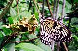 蝴蝶保护区