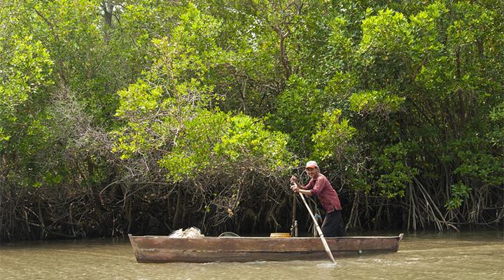 红树林旅游图片