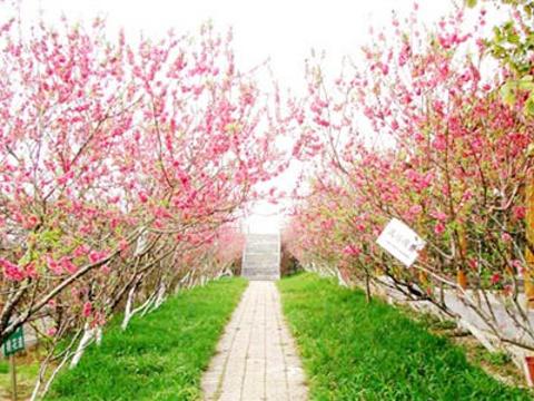 花果山生态园旅游景点图片