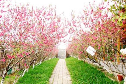 花果山生态园的图片