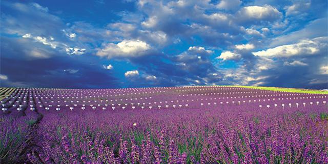 熏香淡紫一日游