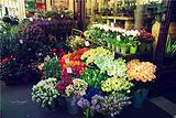 美的金兰花卉