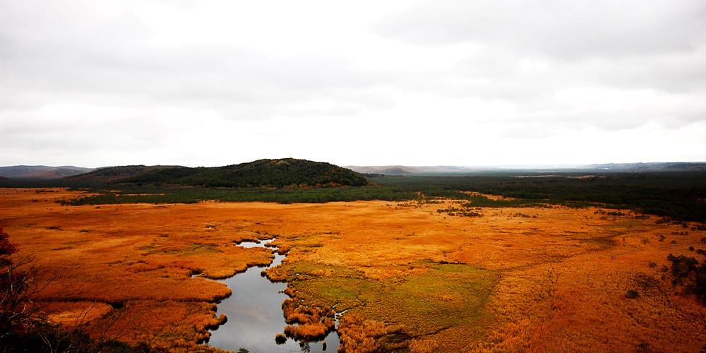 夏季湿原一日游