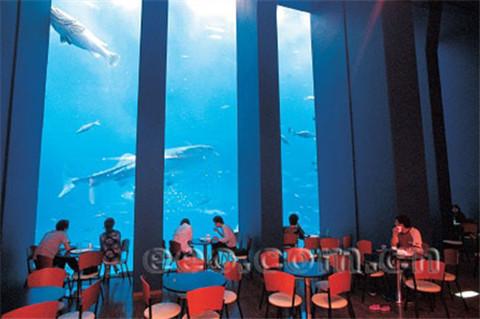 美丽海水族馆餐厅