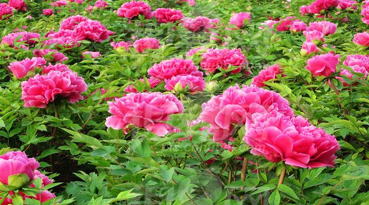 王城公园旅游图片