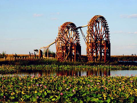 银川鸣翠湖国家湿地公园旅游景点图片