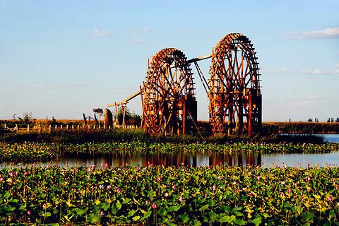 银川鸣翠湖国家湿地公园的图片