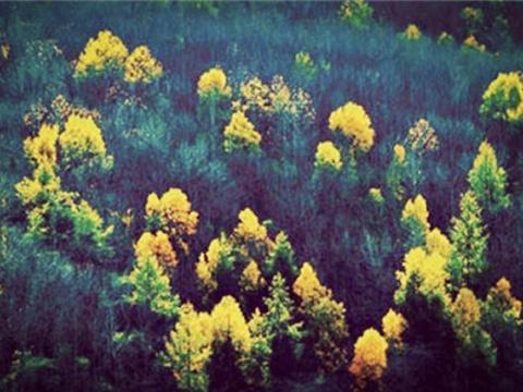密林旅游景点图片