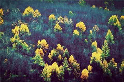 密林的图片