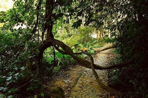 南靖乐土雨林