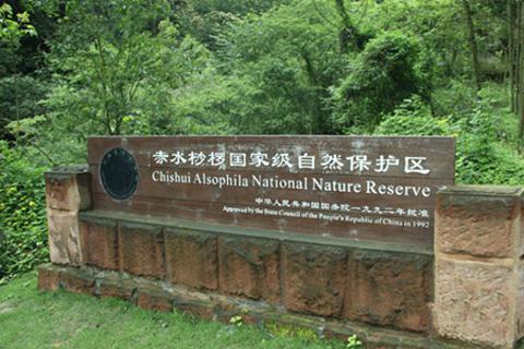 桫椤国家级自然保护区的图片